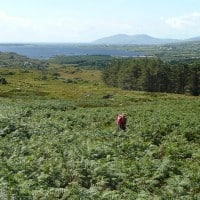 Mountain Walking Ring of Kerry